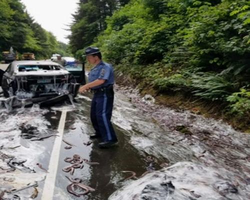 เมือกเหนอะนองไปทั้งถนน! รถบรรทุกปลาไหลเทกระจาด เก๋งตามมาซวยด้วย